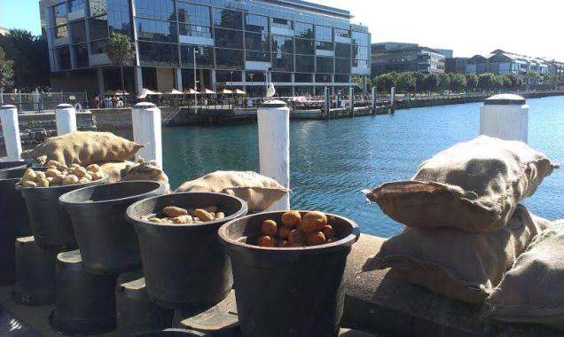 Growers Markets Pyrmont - photo 15
